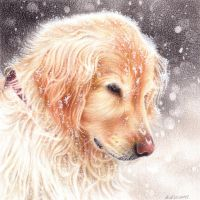 Winter dog by Kot-Filemon