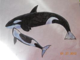 Mother + Baby Orca by CrimsonButterfly4