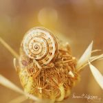 .:Flower's Little Snail:. by Manon-Blutsanguen