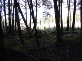 Haunted Woods 1 by seaglasshunter