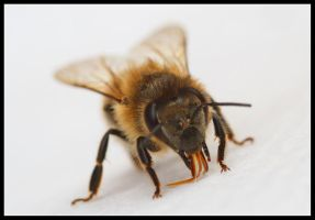 bee4 by 21711