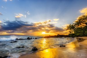 Mellow Yellow by AndrewShoemaker