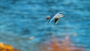 Blurry flight by KrisSimon