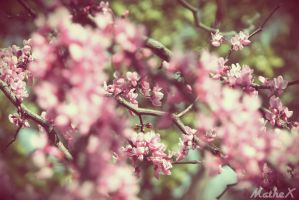 Cherry Blossom by TLL-MatheX