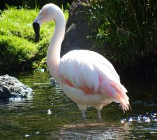 Flamingo 2 - Maui by wildplaces