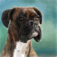Boxer Dog by xXhayleyroxXx