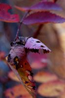 November leaves by CBrengan