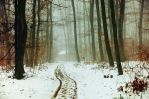 Winter Woods XIV. by realityDream