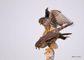 Mating Merlin by Les-Piccolo
