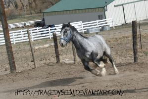 Blue Roan Stock 87 by tragedyseen