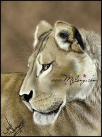 Golden Lioness by mejony