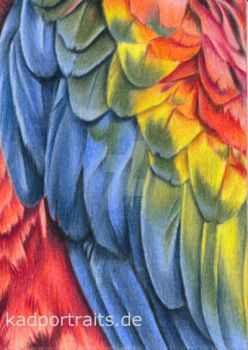 ACEO #25 - Feathers - colored pencil drawing by kad-portraits