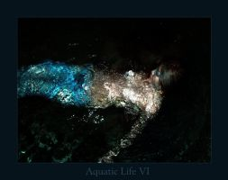 Aquatic Life - VI by ftsf