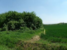 Trees and a wheat field by BMFMhero1991