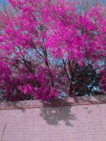 Colourful Tree 2 - Stock by Ravens-Stock