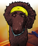 Hobbes (standard poodle) by b1naryg0d