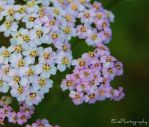 Cluster by ElinsPhotography