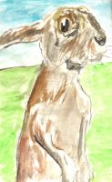 Hare Watercolour by musehick