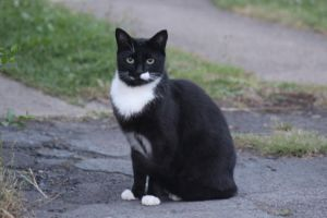 Black And White Cat 2 by lucky128stocks