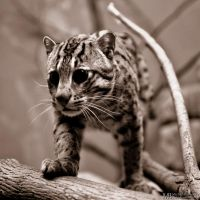 Fishing Cat 4 Who is there? by Yupa