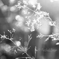 summer light. by this-is-the-life2905