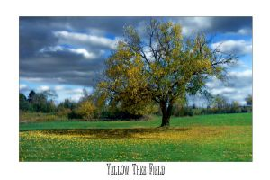 Yellow Tree Field by Myronmhouse