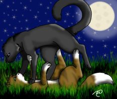 Leafpool and Crowfeather by Raindrop1998