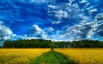 Dirt Road by myINQI
