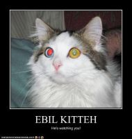 Lolcat- Ebil Kitteh by DreamerPony