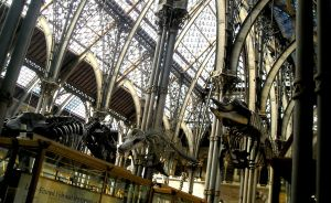 Museum of Natural History 1, Oxford by hecestmoi