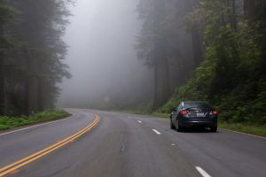 Into the Redwood Forest by SharkHarrington