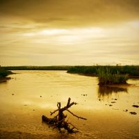 Dead Marsh II by Dave-Ellis