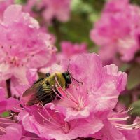 Bumble Bee by AcceptedOutcast