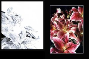 Unfinished lillies 1 by lovingenglish