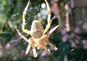 Spider Macro by j-a-x