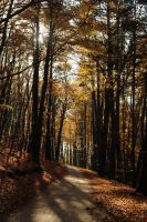 beechen forest VI by Wilithin