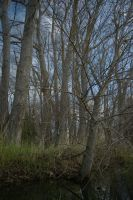 The Copse by FallowpenStock