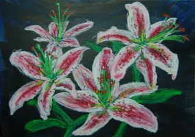 Pink Lilies by davepuls