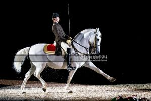 Spanish Riding School 27 by JullelinPhotography