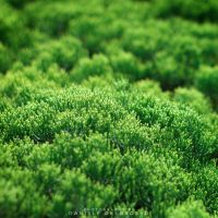Green Cradle by dandelgrosso