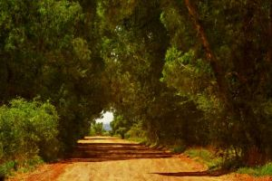 Tunnel of trees by EMCoetzee