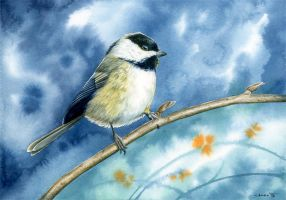 Chickadee by Siluan