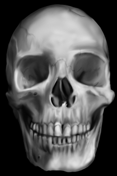 Skull Painting by timlai