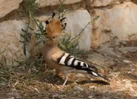 Bird at the Acropolis by mr-lacombe