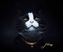 Owner by Malina-art