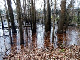 Flooded Swamp by Daemare