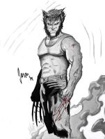 The Wolverine by TheSketchaholic