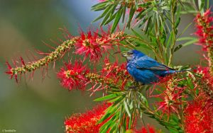 Who Could Be Blue amid the Red Flowers? by TerribleTer