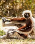 Zoboomafoo by Daveinwilton