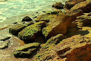 Mossy Stones 1 by ximocampo